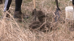 Students plant trees on Earth Day in Markham Canada v49 Stock Footage