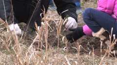Students plant trees on Earth Day in Markham Canada v50 Stock Footage