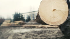 Large log loader and operations in the log yard at a conifer log mill. Stock Footage