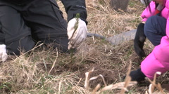 Students plant trees on Earth Day in Markham Canadav52 Stock Footage
