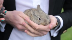 Man holding a rabbit in the hands Stock Footage