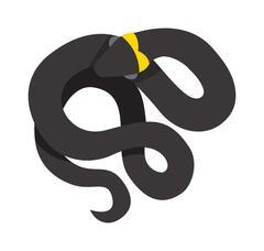 Stock Illustration of Black mamba uncoiled reptile ready to strike snake dangerous venomous animal