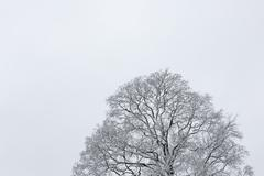 Big tree cloudy sky black and white background Stock Photos