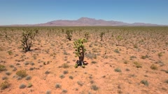 Aerial shot of joshua tree cactus plants in nevada desert Stock Footage