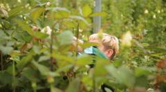 Woman gardener in the rose garden - stock footage