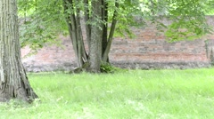 Park with green grass and red brick wall Stock Footage