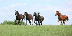 Beautiful herd of horses running together Stock Photos