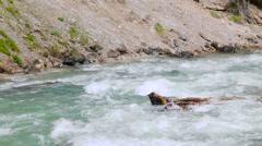 Rapid mountain river in Abkhazia Stock Footage