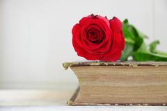 Red rose on an old book. Wooden table and white background. - stock photo