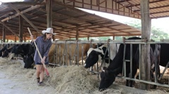 Cow Girl working on farms Stock Footage