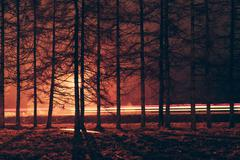 Trees against car light trails in the road Stock Photos