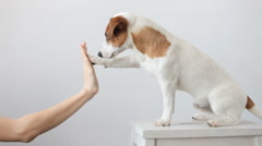 Dog paw supplies. Greeting - stock footage