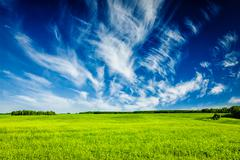 Spring summer green field scenery lanscape Stock Photos