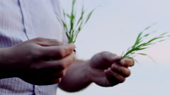 Stock Video Footage of A field of wheat. Agronomist examines wheat plants.