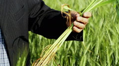 A field of wheat. Agronomist examines wheat plants. Stock Footage