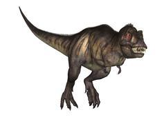 3D Illustration Tyrannosaurus on White - stock illustration