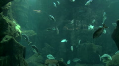 Aquarium in Madeira island - Portugal - stock footage