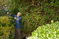 Older man trimming hedges in garden Stock Photos