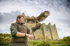 Young woman wearing gauntlet holding harrier hawk (Accipitridae) outside Bolton - stock photo
