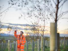 Ecologist inspecting young trees at site of surface coal mine restoration Stock Photos