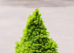 The Bare Christmas tree ready to decorate. - stock photo