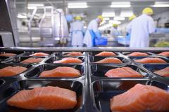 Salmon fillets on packaging in foreground of busy food factory Stock Photos