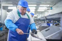 Production line of workers filleting fish in food factory Stock Photos