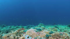 Coral reef with Tunas and plenty fish. 4k Stock Footage