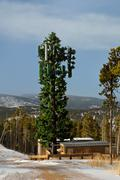 Cell Tower Disguised as a Tree - stock photo