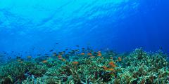 Fish swimming in coral reef Stock Photos