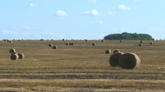 Big Roll Harvested Straw on the Mown Field With Great Perspective and Other Stock Footage