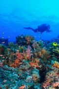 Diver swimming in coral reef Stock Photos