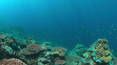 4k Coral reef with healthy hard corals - stock footage