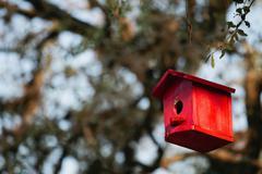 Birdhouse hanging from tree - stock photo