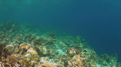 Colorful reef with healthy hard and soft corals Stock Footage