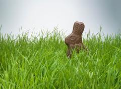 Chocolate bunny hiding in grass Stock Photos