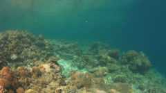 Hard and soft corals. 4k Stock Footage