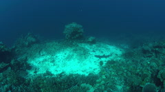 Whitetip reef shark on a coral reef. 4k - stock footage