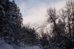 Snow covered trees in forest, Wasatch Mountains, Utah, USA Stock Photos