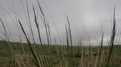 Stems Herbaceous Plants Swaying in Wind in Steppe Stock Footage