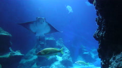 Underwater Fish And Sting Ray Stock Footage