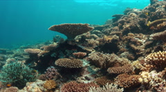 Grouper on a colorful coral reef. 4k Stock Footage