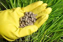 Fertilizer in hand on background of green grass Stock Photos