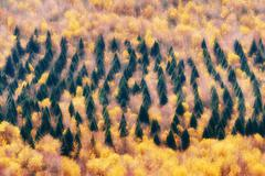Forest of evergreen and deciduous trees Stock Photos
