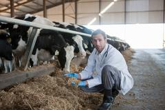 Vet on a dairy farm - stock photo