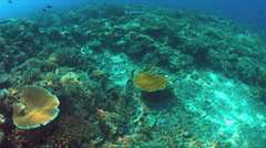 Moray eel swims over a coral reef Stock Footage