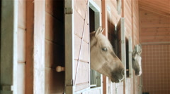 Horses in stable Stock Footage