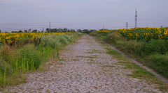 Old stone road in a field Stock Footage