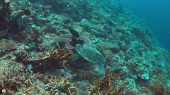 4k Hawksbill turtle swims on a Coral reef Stock Footage