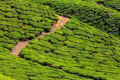 Tea plantations, India Stock Photos